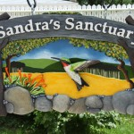 sandra_700